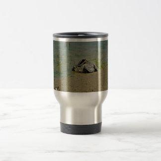 Jackrabbit in Water Mugs