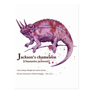 Jackson s chameleon - wine 葉書き