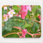 Jackson's Chameleon Mousepad