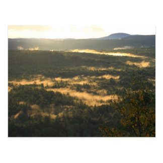 Jacobs Hill Forest Fog Post Cards