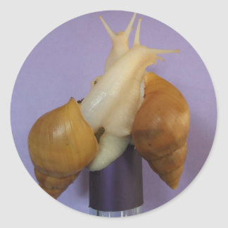 Jadatzi Snail Love Classic Round Sticker