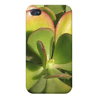 Jade Plant iPhone Case Cases For iPhone 4