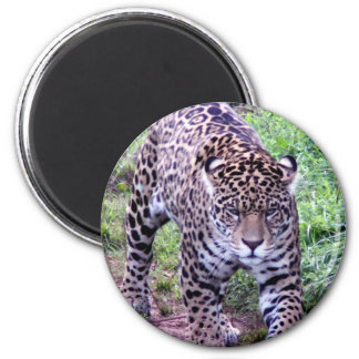 Jaguar Africa Jungle Safari Nature Peace Destiny 6 Cm Round Magnet