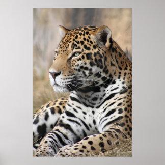 Jaguar Classic Poster