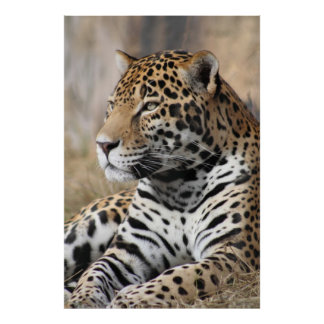Jaguar Classic Poster -40x60 -other sizes also
