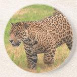 Jaguar Coasters