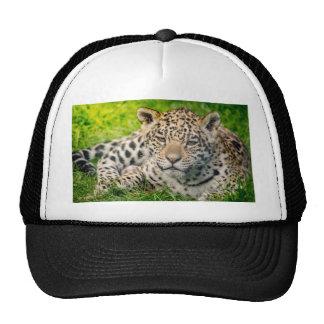 Jaguar cub cap