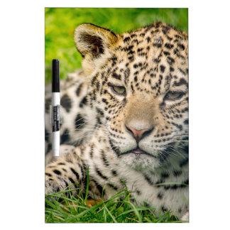 Jaguar cub dry erase board