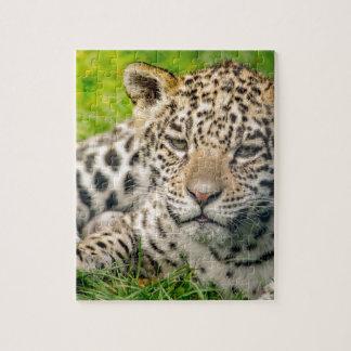 Jaguar cub jigsaw puzzle