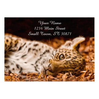 Jaguar Cub Lying in Foliage Pack Of Chubby Business Cards