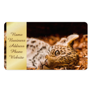 Jaguar Cub Lying in Foliage Pack Of Standard Business Cards