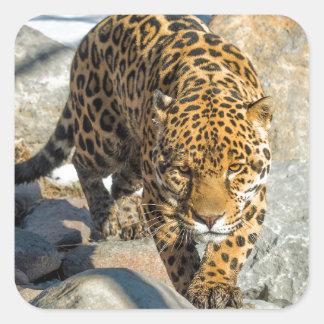 Jaguar Custom Products Square Sticker