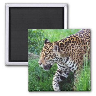 Jaguar Habitat Square Magnet