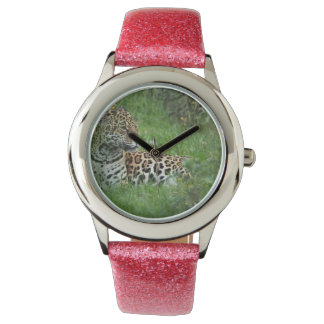 Jaguar Habitat Watch