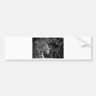 Jaguar in black and white bumper sticker
