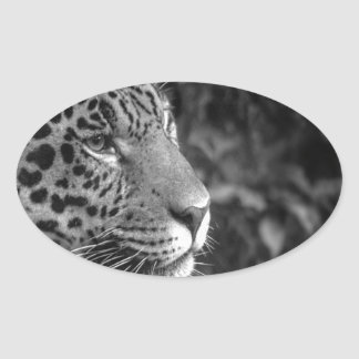 Jaguar in black and white oval sticker