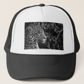 Jaguar in black and white trucker hat