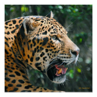 Jaguar in May Poster