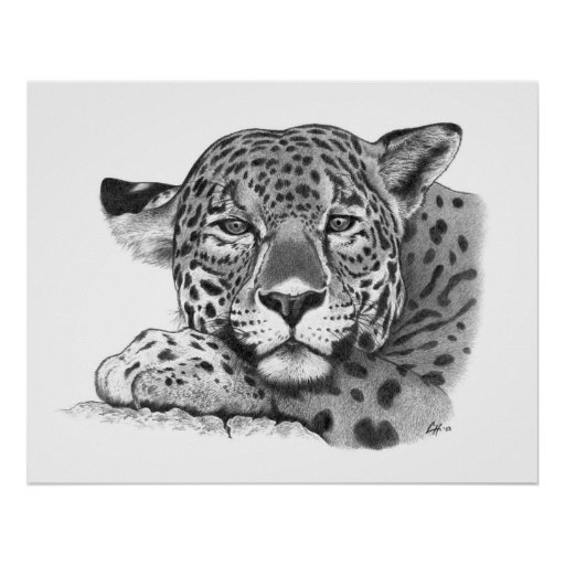 Jaguar in Pencil Poster