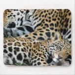 jaguar-mum-and-baby