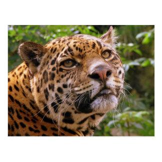 Jaguar Postcards