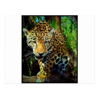 Jaguar Postcard