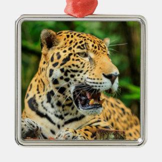 Jaguar shows its teeth, Belize Christmas Ornament