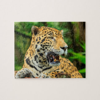 Jaguar shows its teeth, Belize Jigsaw Puzzle