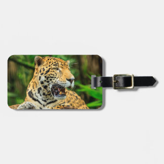 Jaguar shows its teeth, Belize Luggage Tag
