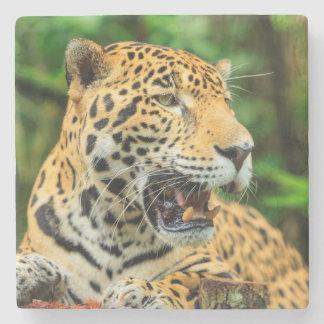 Jaguar shows its teeth, Belize Stone Coaster