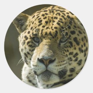 Jaguar Round Sticker