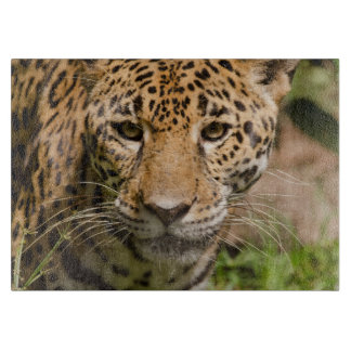 Jaguarclose-up of face cutting board