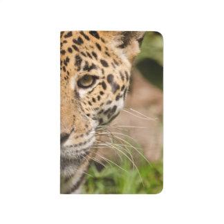 Jaguarclose-up of face journal