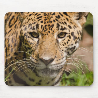 Jaguarclose-up of face mouse mat
