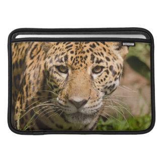 Jaguarclose-up of face sleeve for MacBook air