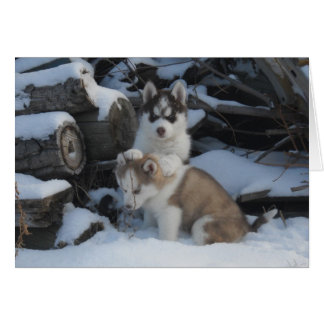 Jaida & Zayda hiding in the woodpile Cards
