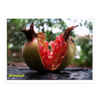 Jamaica Pomegranate Postcard