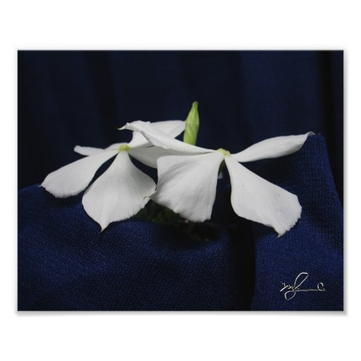Jamaican Beautiful Flowers 1 Photo Art
