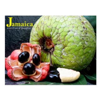 Jamaican Breadfruit and Ackee Fruit 2k17 Postcard