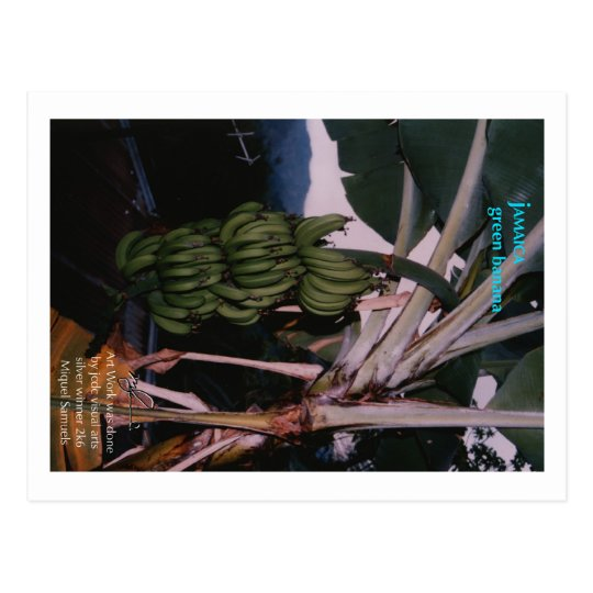 Jamaican Green Banana Postcard