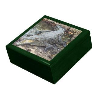 Jamaican Salt Water Crocodile Jewelry Box