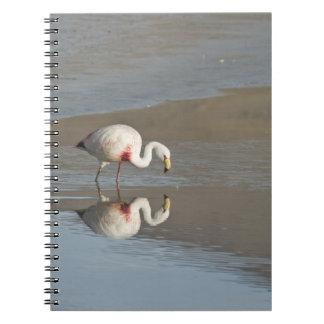 James flamingo (Phoenicoparrus jamesi). Notebook