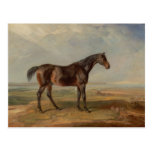 James Ward - Dr. Syntax, a Bay Racehorse Post Cards