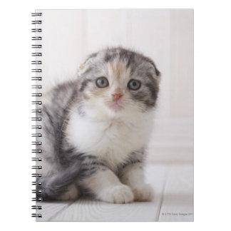 Japan 5 notebooks