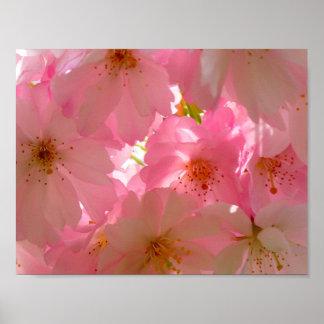 Japan Cherry Flowers Poster