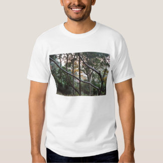 Japan Forest Shirts