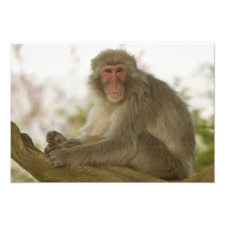 Japan, Honshu island, Kyoto, Arashiyama Monkey Photo Art