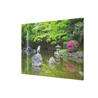 Japan, Kyoto. Heron in fresh green leaves Canvas Print