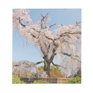 Japan, Kyoto. Weeping cherry tree under blue sky Notepad