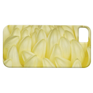 Japan, Mie, Ise Shrine, Chrysanthemum iPhone 5 Case